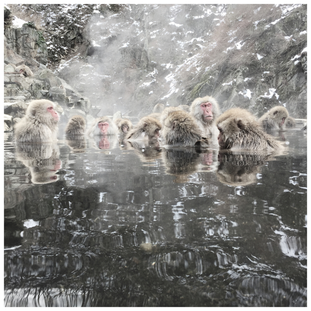 Macaques in Hot Springs